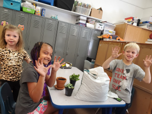 Planting our classroom plants.